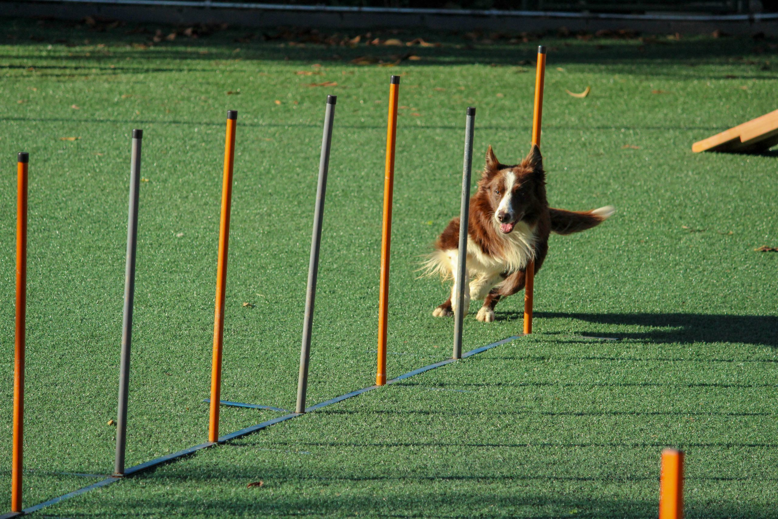 adiestramiento-canino-en-madrid